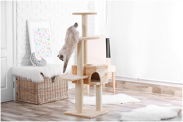 Let All Cats have Fun with cat trees: Making all animals live their best lives